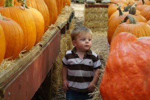 Chandler looking for the perfect pumpkin.